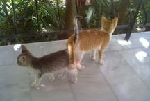 My Cats!