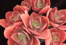 Каменные розы