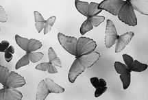 For The Love of Butterflies ✴