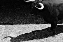 ah la vache