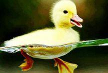 Feathered Friends / Birds Birds & More Birds