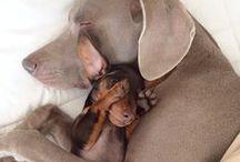woof woof / YHay! Doggies ~:)