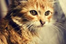meow meow meow / Kitty cats!