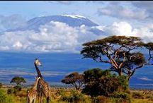 Tanzania / Tanzania mantiene aún lugares paradisíacos donde la naturaleza virgen esta poblada de una flora exuberante y exótica junto a una fauna impresionante.