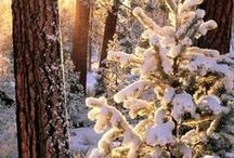 Dreamy Winter / ⛄