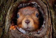 squirrels n squeakies