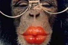 Monkeys make me giggle / by susan davis