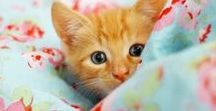 Pets on Quilts / Some cutest pet pics