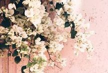 Spring Inspiration / Mabba spring inspo