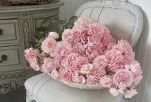 floristic wonders