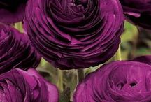 Events design. Purple inspirations / Purple inspirations for themed events and ceremonies in Italy, England, Russia