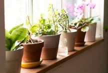 Potted Plant Care / Caring for potted plants can be tricky, but with Daisy you give your plants a voice. Here we've found other tips and tricks to help you keep your indoor or outdoor potted plants thriving.