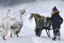 walking in a winter wonderland / Love of winter. Inspirational winter images.
