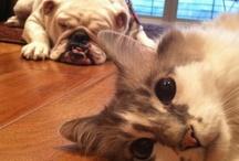 Kitty&Dog