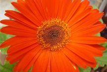Garden.... / Photos from my garden...