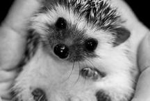 sweet --- cute Animals - Tiere - dieren