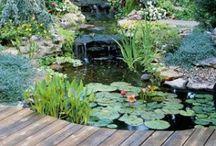 Garden inspiration & tips