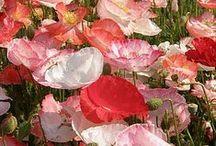 Flowers, bouquets...