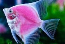 Amazing Fish in life and art