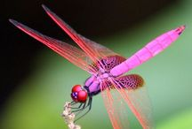 Dragonflies / Dragonflies in life and in art