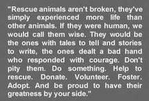 Quotes for the Animal Lover