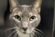 Cats that need homes! / Cats that are currently in need of a loving home from our local NYC shelters.