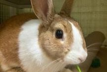 Bunnies that need homes!