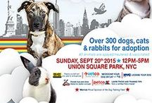 Adoption Events / Includes animals throughout NYC that are currently up for adoption & looking for a forever home.