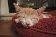Our Foster Album! / Photos of some of our wonderful foster pets from ACC of NYC.