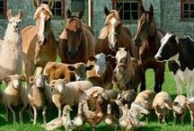 #14 Pets-Animals (Domesticated) @LIFETEAMS / MOTIVATIONAL & #Humor PINS of #America's #PETS and #FarmAnimals from here & around the #World. Follow Us THEN Ask for an Invite (see Board #00) to Pin on this Board: PICTURES of: #Horses, #Cows, #Sheep, #Goats, #Ducks, #Rabbits, #Chickens, #Dogs, #Cats, #Pets and other #Domesticated #Critters. (No Wild Animals - PLEASE Name Animal on PIN) Find #LIFECommunity LIFE Information/Contact: http://www.lifeleadership.com/61235363