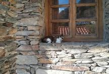 Los gatos dominarán el mundo / ya lo dijo Gaiman