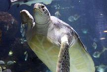 sae life / over alemaal zee dieren