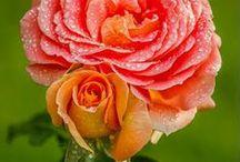Romantic * Flowers * Life  ♥♥