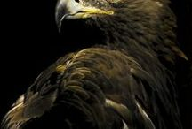 Eagle (sas)