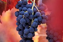 Barbera Wine / Barbera, red grape from the Piedmont region of Italy. We grow it in our Estate Vineyard and love the wines!