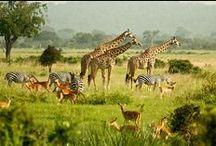 Traveling Tanzania