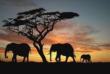 Traveling Kenya