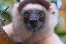 Traveling Madagascar