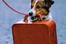 Traveling Places? / Ways to bring your pet while you are traveling (yards with camping)