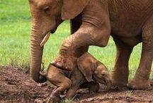 Everything Elephants / The official mascot of the GOP.