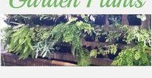 Garden Plants / Plants and how to care for them