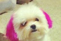 """Doggy Hairstyles / Do you give your dog their own """"do"""" or do you have the groomers do it?"""