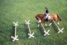 In riding a horse we borrow freedom