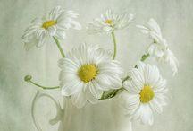 { daisy }