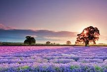 Bucket list, Provence