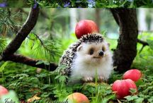 Animals / All cute and furry animals