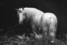 Black & White Unicorns
