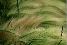 il giardino mediterraneo / profumi e colori delle piante mediterranee.Piante autoctone e piante adattabili ad un giardini in clima mediterreneo...  / by Sabrina Twins