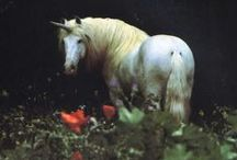 Horse Love / Horses are truly the most beautiful animal on this earth.