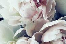 λουλούδιa / Beautiful flowers captured in time.